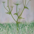 Queen Annes Lace with Lady Smocks and Stitchwort thumbnail