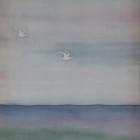 White Gulls thumbnail