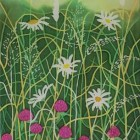 Daisies and Clover thumbnail