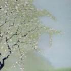 Meadow Hawthorn thumbnail